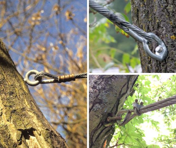 Installing a tree brace in 3 simple steps